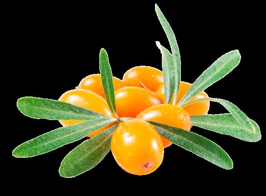 Ginscape Fruit